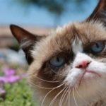 Советы для кошек