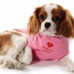 Правильный уход за шерстью у собаки