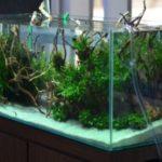 Для каких аквариумов может понадобиться водяная помпа?